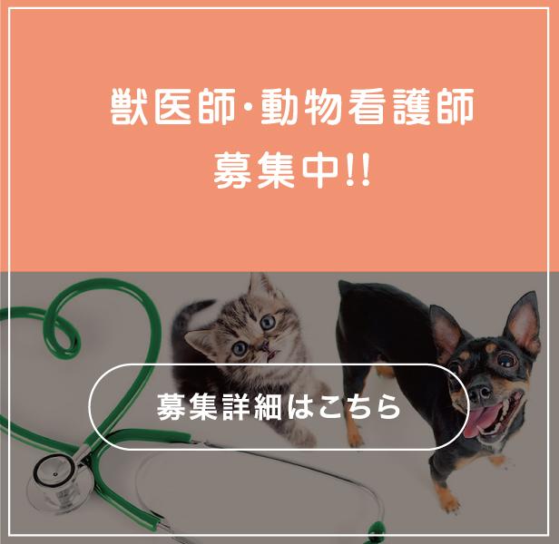 獣医師・動物看護師募集中!